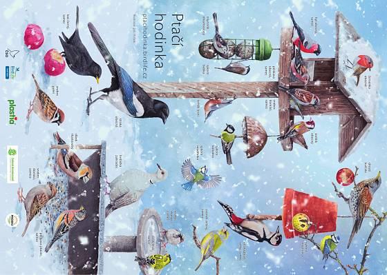 Ilustrovaný plakát nejčastějších návštěvníků krmítek vytvořený Českou společností ornitologickou.