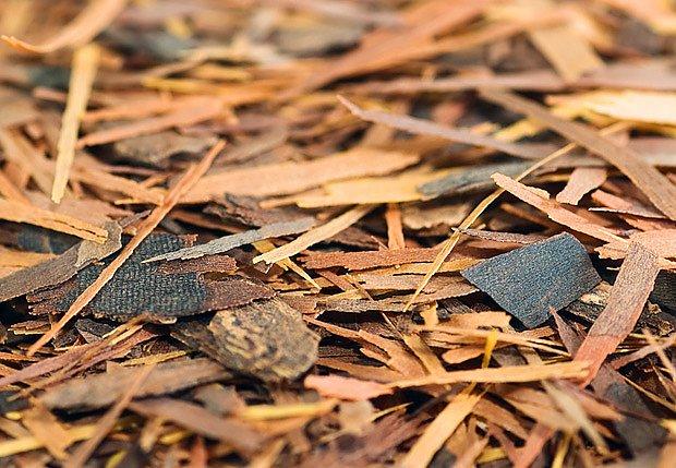 Kůru lapacha používali již staří Inkové