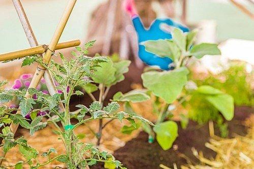 Bambus může být estetický opětný systém pro vaši zeleninu.