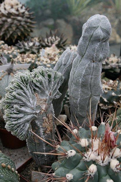 Sbírka kaktusáře Pavla Líznara