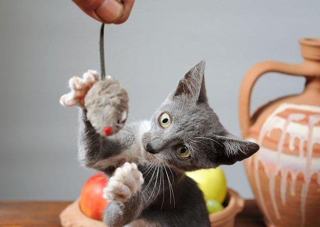 Kočky potřebují zábavu