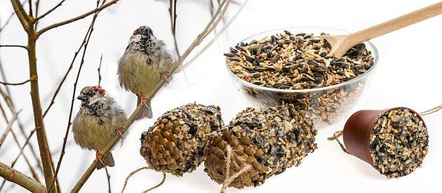 Domácí lojové dobroty potěší sýkorky, brhlíky, strakapoudy i vrabce