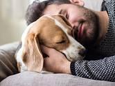 Psi nám dávají svou lásku najevo neustále, měli bychom jim to bohatě oplácet.