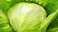 Sto gramů syrového bílého zelí dodá tělu takové množství vitaminu C jako sklenice pomerančové šťávy.