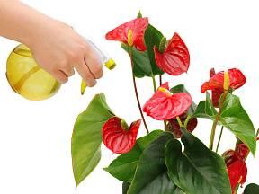 Toulitka patří mezi rostliny, kterým mlžení listů velmi prospívá.