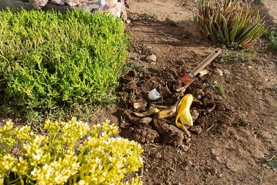Banánové slupky představují pro rostliny bohatý zdroj draslíku.
