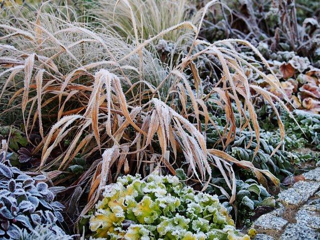 Hakonechloa - tráva, která má svůj půvab i na zimní zahradě.