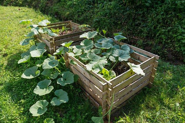 Do zrajícího kompostu můžete vysadit dýně