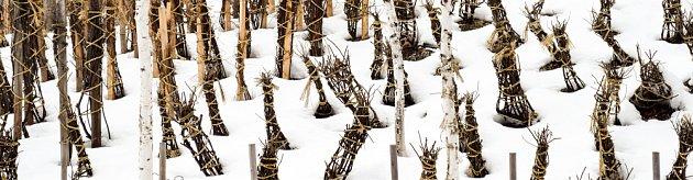 Zimní ochrana stromků