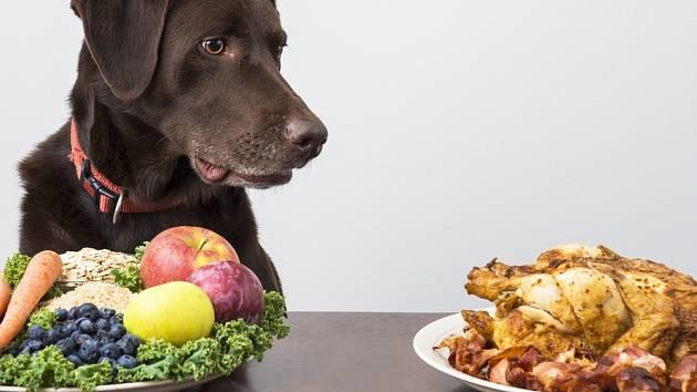 Čistě rostlinná strava pro psy není vhodná.