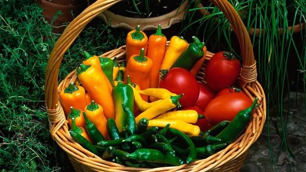 Rajčata a papriky se výborně doplňují nejen pro oko, ale i na talíři. A co teprve s bylinkami!