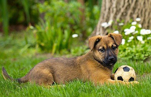 Psi mají oproti vlkům bezstarostnější život a prodloužené dětství.