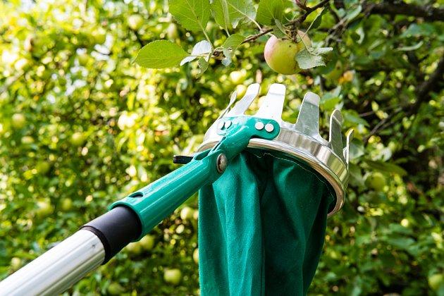 Pro sklizeň ovoce využijte trháček na teleskopické tyči