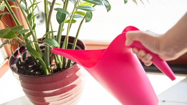Pokojové rostliny bychom neměli nikdy přelévat.