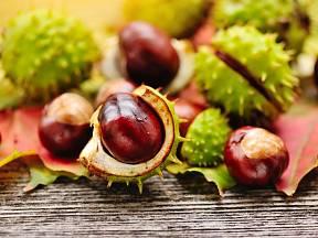 Kaštany, plody jírovce maďalu zvaného koňským kaštan.