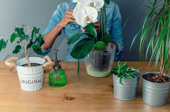 Na hnojení orchidejí lze využít mnohé zbytky z domácnosti.