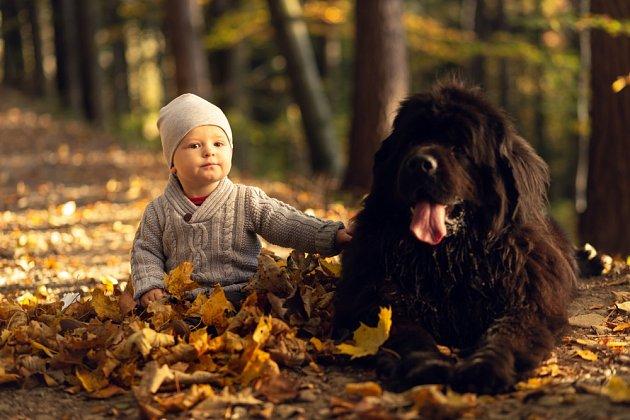 Něžný obr - novofundlandský pes snáší dobře dětské dotyky.