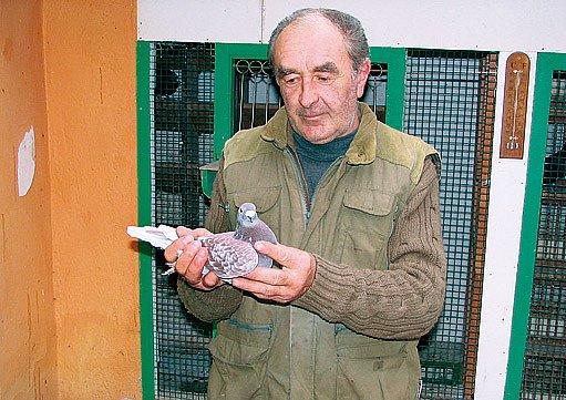 Chovatel Ladislav Novák s oblíbenou holubicí