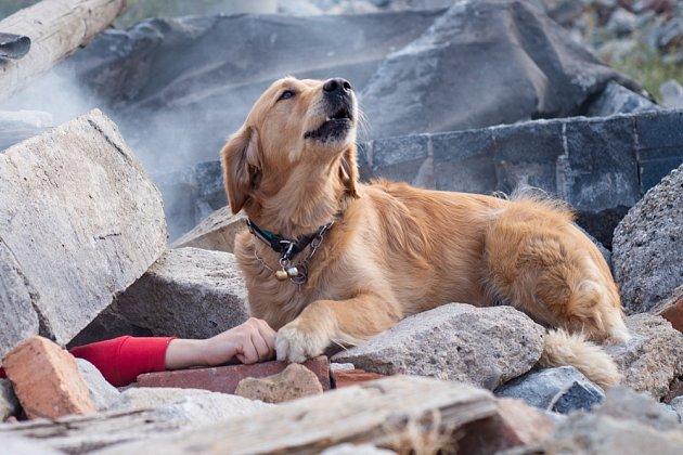 U mantrailingu se hodnotí, zda tým - pes/psovod hledanou osobu najde a přesně ji označí.