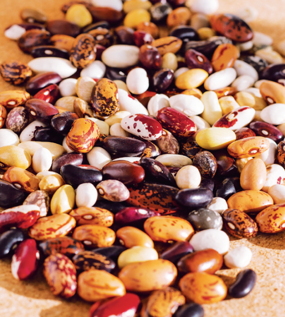 Rozmanitost fazolí je úchvatná