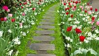 Záhony plné kvetoucích cibulovin lemují šedé prefabrikované nášlapy v dlouhém chodníčku.