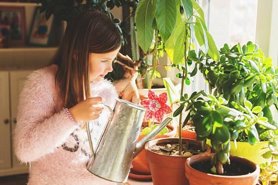 Větší děti již mohou samy pečovat o celou řadu rostlin, včetně kaktusů.
