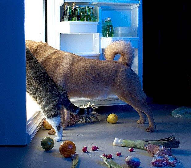 příspěvek na krmivo potěší i kočičího kamaráda
