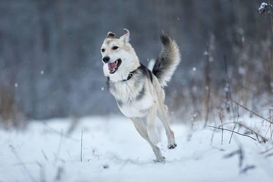 Některé rasy psů snášejí zimu mnohem lépe než parné léto.