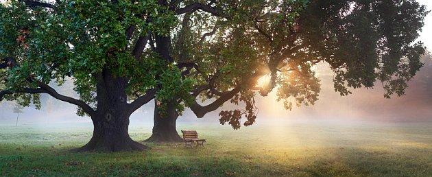 Mohutné staré stromy jsou živoucí poklad