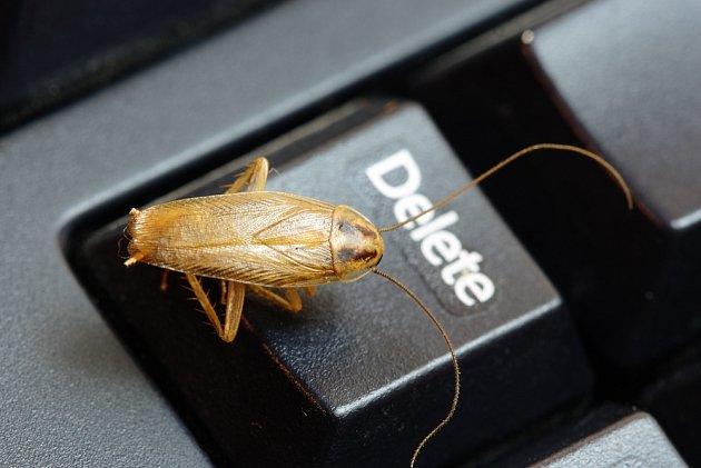 """""""Vymazat"""" šváby a rusy z domácnosti zvládnete i svépomocí. S profíky je to ale efektivnější."""