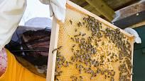 Včelaříci kontrolují rámky