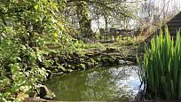 Zahradní jezírko znásobí krásu i pestrost zahrady a zvýší tak biodiverzitu na ní
