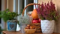 Krásnohlávek je skvělý jako součást podzimních dekorací.