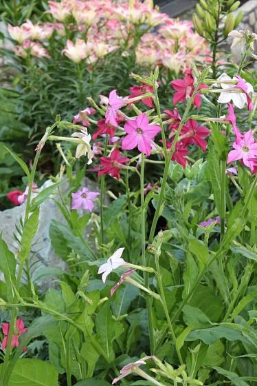 Rostliny se neobejdou bez pravidelní zálivky a přihnojování.