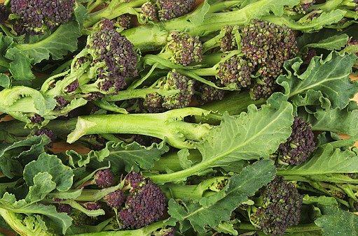výhonková brokolice