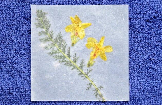 Po vložení květin do vosku papír přeložíme