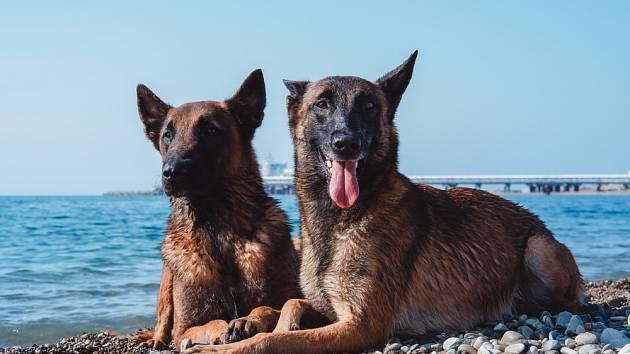 Existují zprávy o tom, že pes nebo kočka odhalili vážné onemocnění svého páníčka