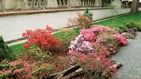 Vhodnými rostlinami do vřesovišť jsou kromě vřesů a vřesovců i azalky a rododendrony