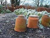 Ne všechny zeleninové záhony v zimě odpočívají