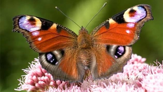 Zahrada Plna Motylu Hmyz A Bezobratli