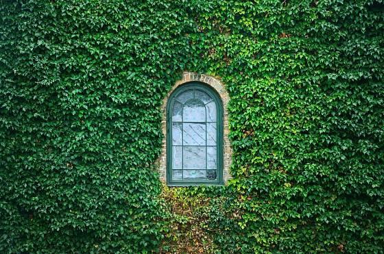 Břečťan umí domy obléci do krásného zeleného kabátku