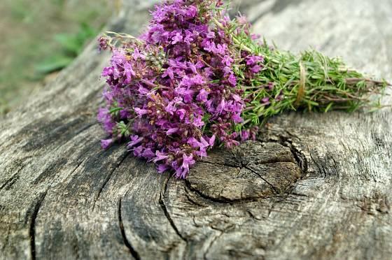 Mateřídoušku sklízíme v době květu