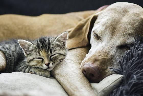 Chovat se k sobě jako kočka a pes, to může znamenat, že jste nerozluční přátelé.