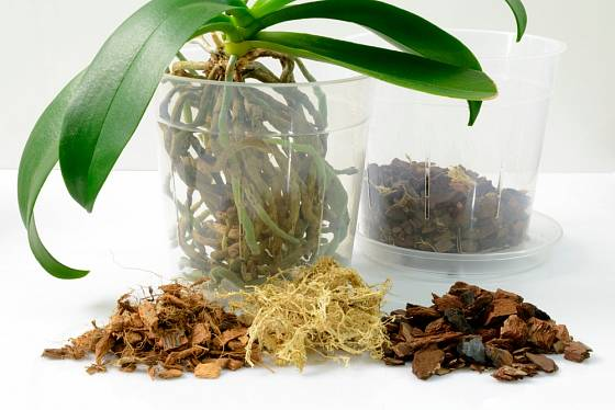 Orchidejový substrát můžeme obohatit o mech a kokosová vlákna.