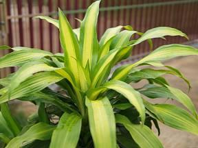 Říká se, že když na rostliny mluvíte, rostou rychleji a lépe prospívají