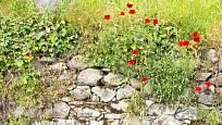 Suché zídky umožní suchomilným rostlinám žít pouze z dešťové vody, byť jsou srážky skoupé