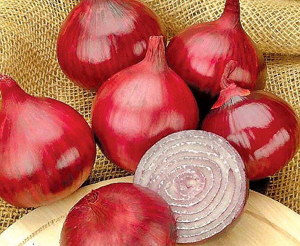 cibule - perla kuchyně