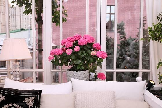 Kvetoucí hortenzie skvěle doladí obývací pokoj.