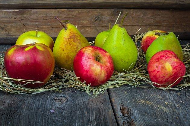 Podzimní a zimní jablka a hrušky vydrží ve vhodném sklepě dlouho kvalitní