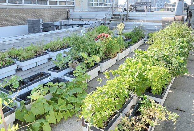 V metropolích se často komunitní zahradničení odehrává na plochých střechách.